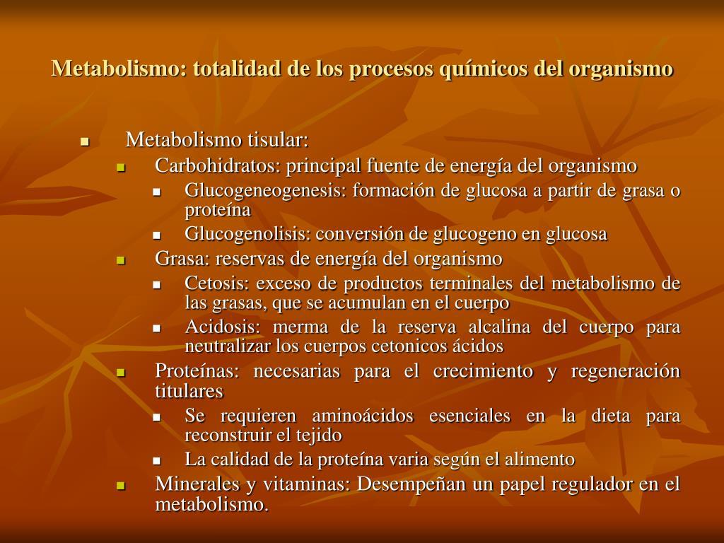Metabolismo: totalidad de los procesos químicos del organismo