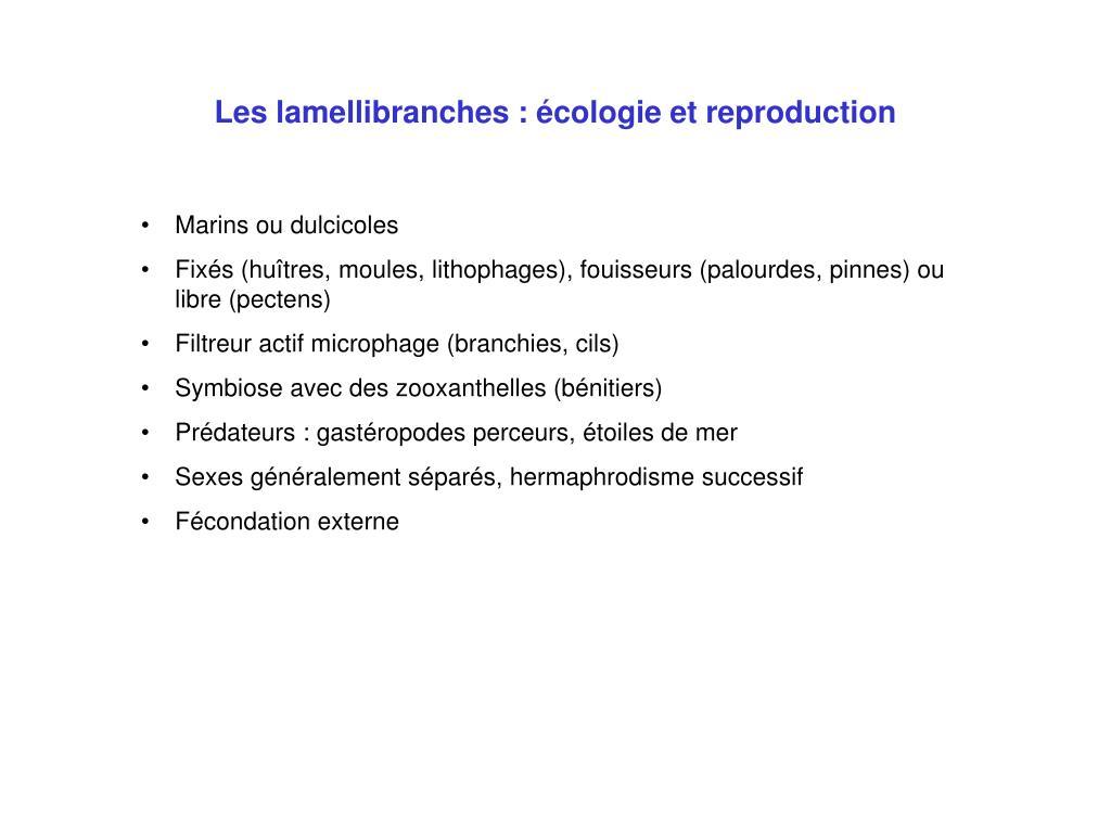 Les lamellibranches : écologie et reproduction