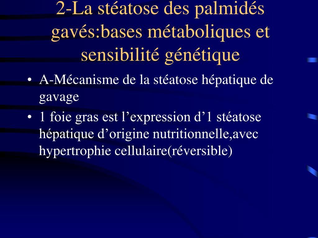2-La stéatose des palmidés gavés:bases métaboliques et sensibilité génétique