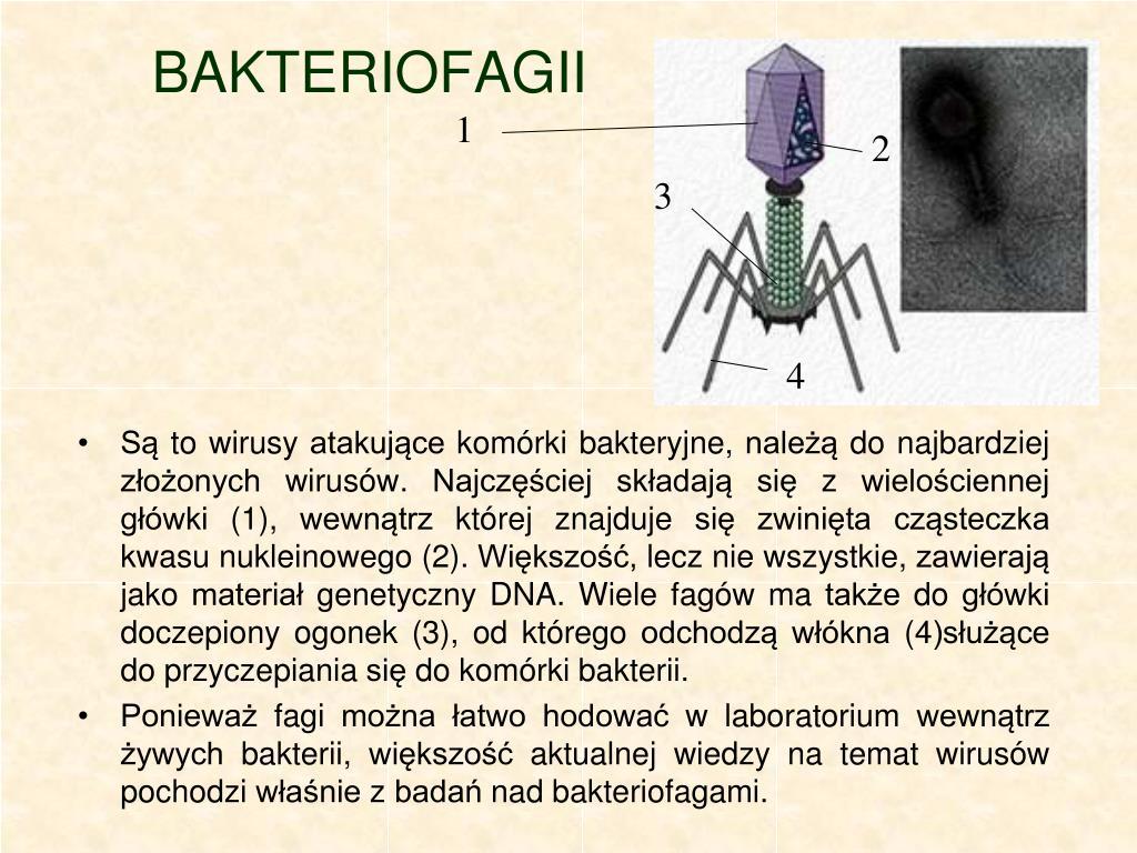 BAKTERIOFAGII