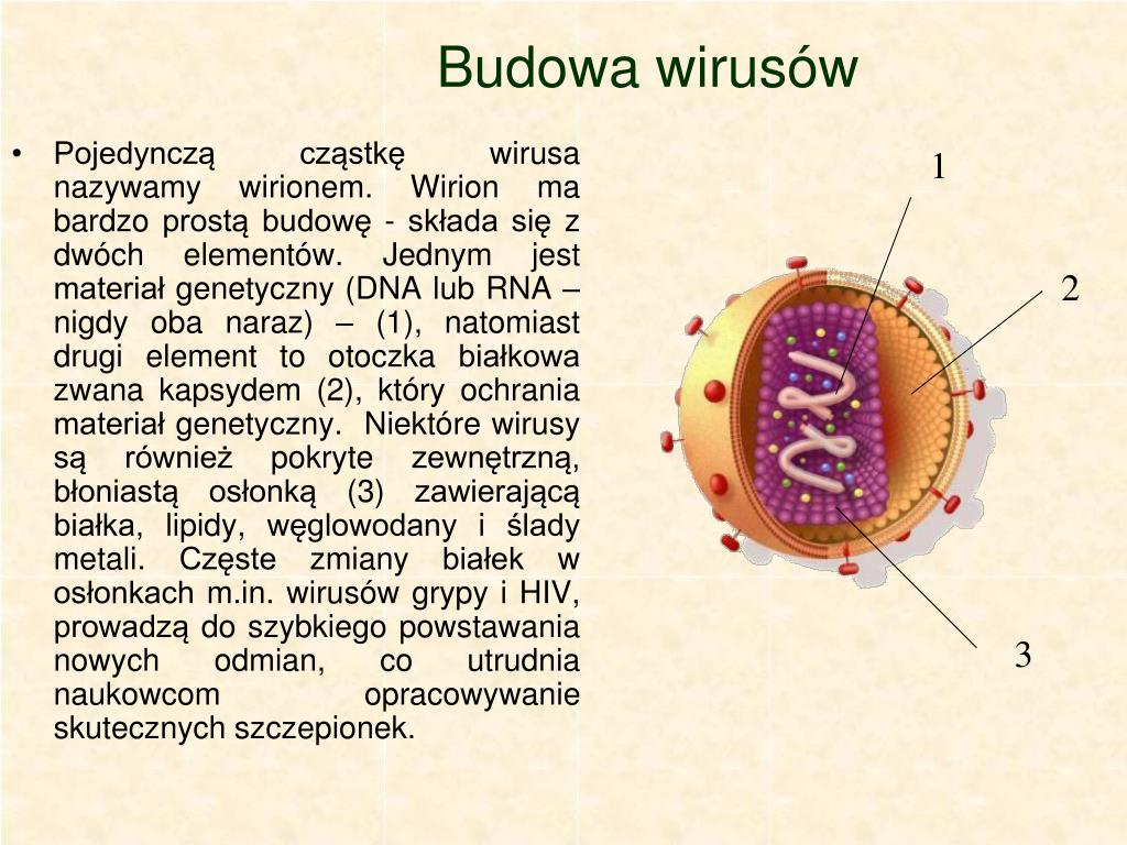 Budowa wirusów