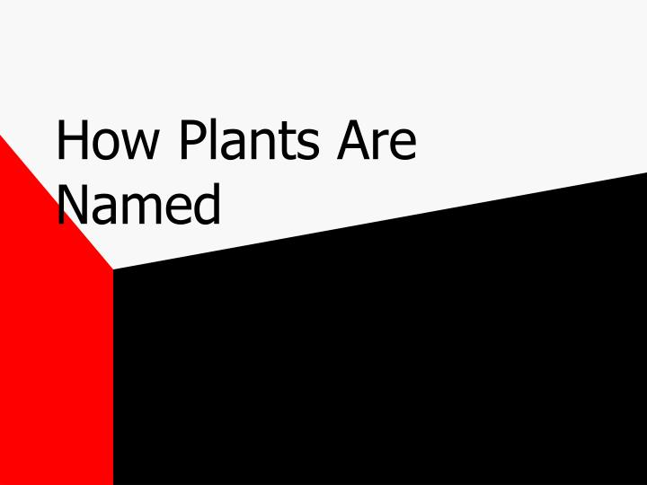 How plants are named l.jpg