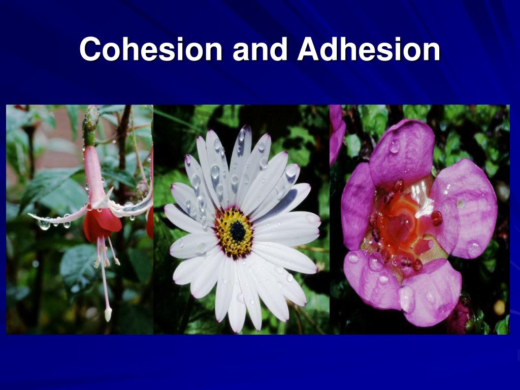 Cohesion and Adhesion