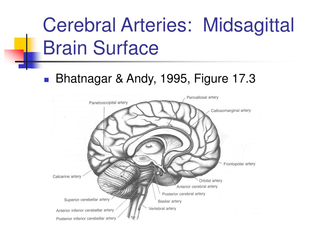 Cerebral Arteries:  Midsagittal Brain Surface