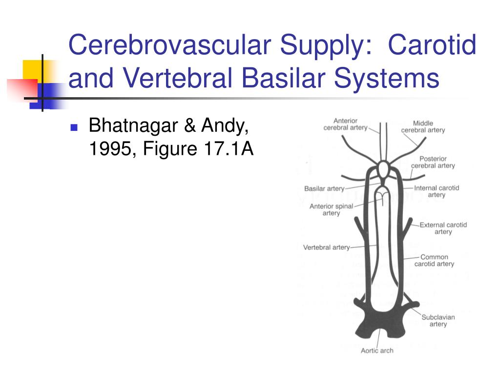 Cerebrovascular Supply:  Carotid and Vertebral Basilar Systems