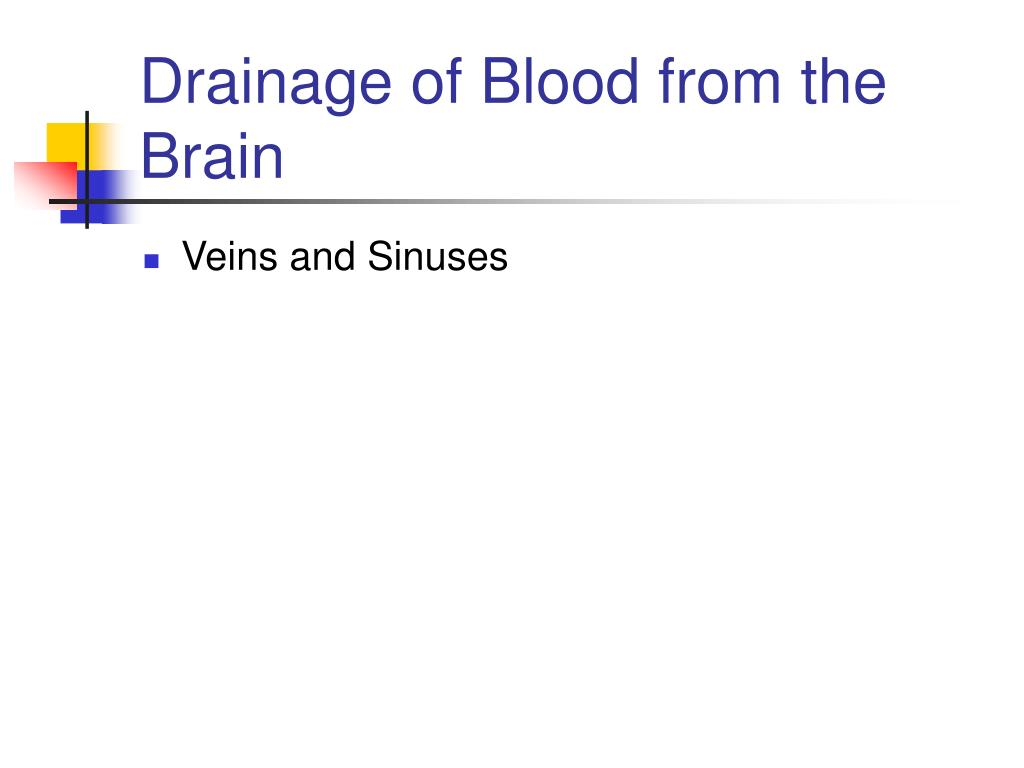 Drainage of Blood from the Brain