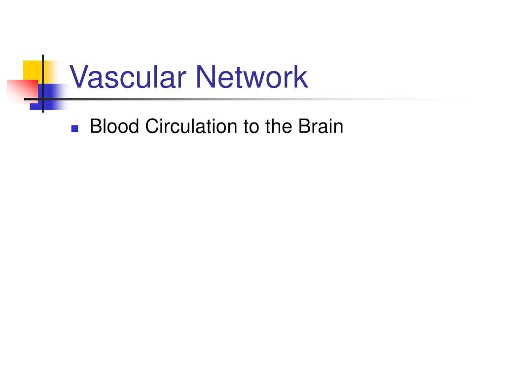 Vascular Network
