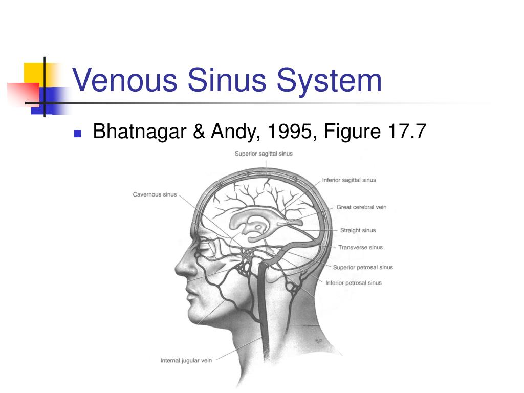 Venous Sinus System