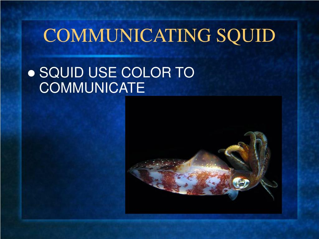 COMMUNICATING SQUID