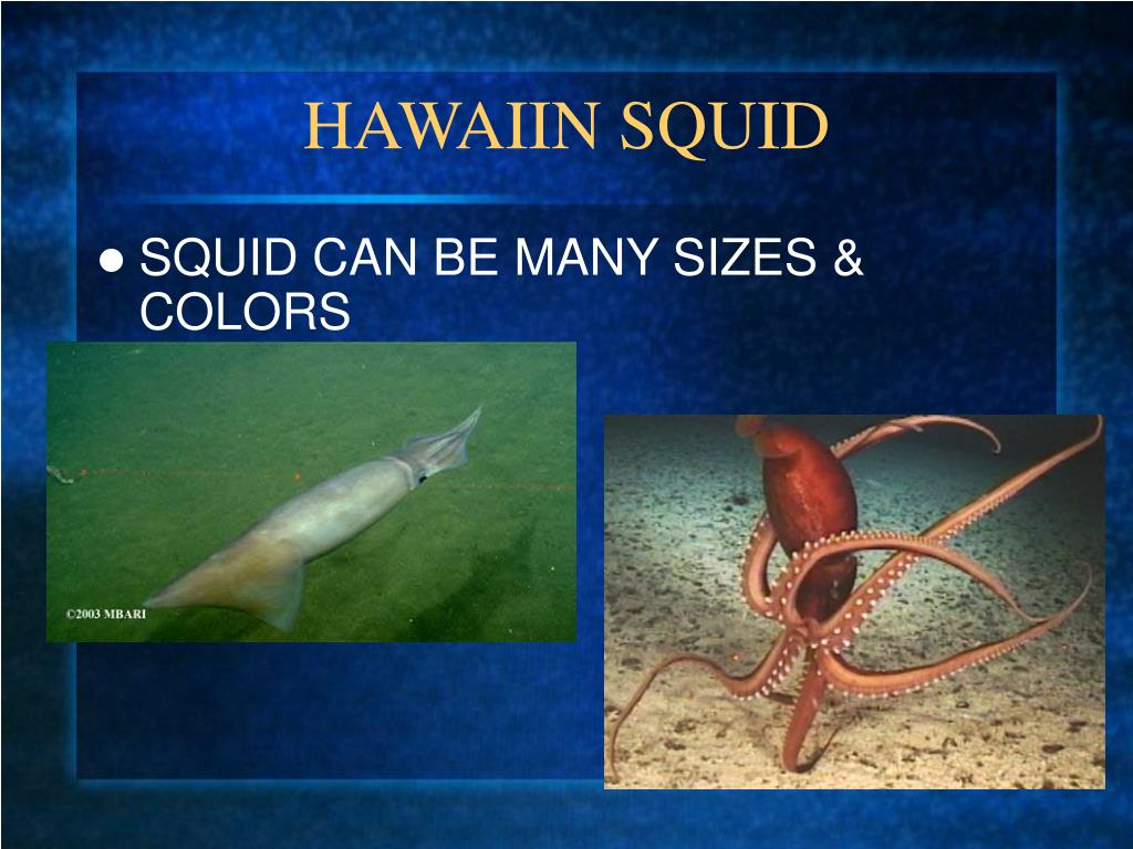 HAWAIIN SQUID