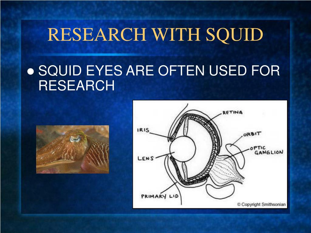 RESEARCH WITH SQUID