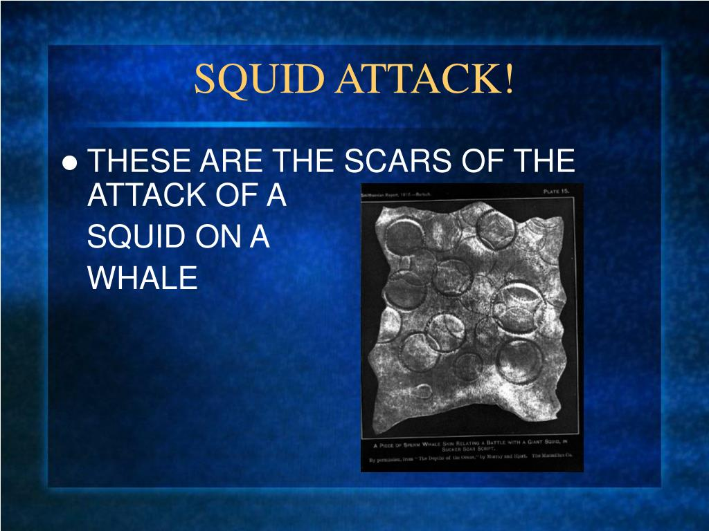 SQUID ATTACK!