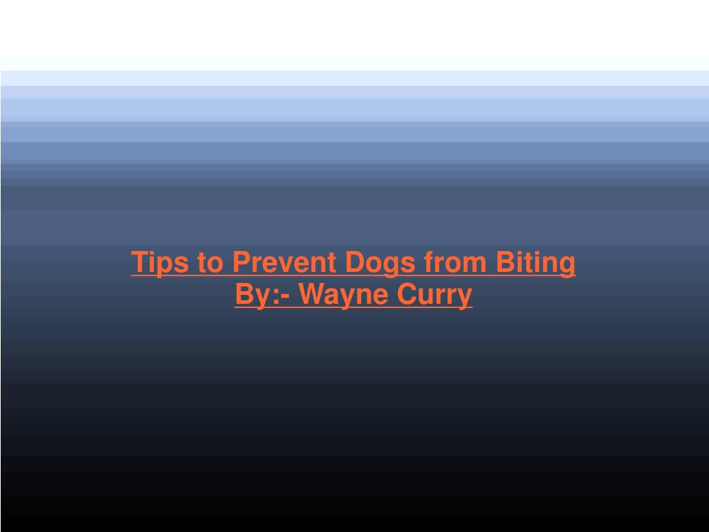 Tips to Prevent Dogs from Biting
