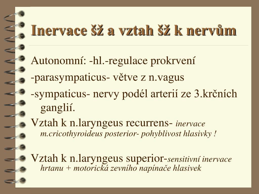 Inervace šž a vztah šž k nervům