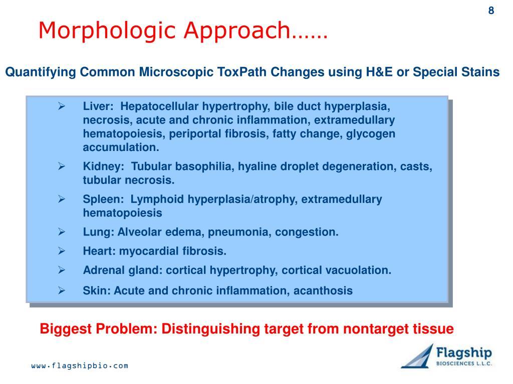 Morphologic Approach……