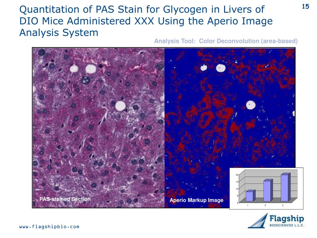 Quantitation of PAS Stain for Glycogen in Livers of DIO Mice Administered XXX Using the Aperio Image Analysis System