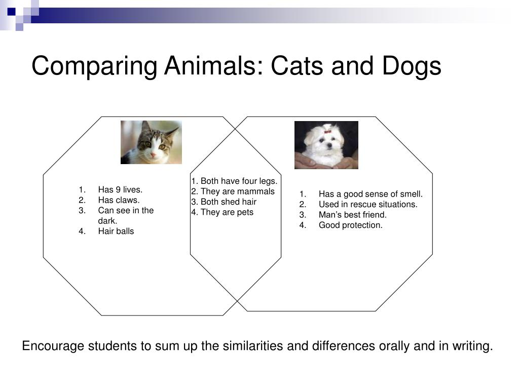 Comparing Animals: Cats and Dogs