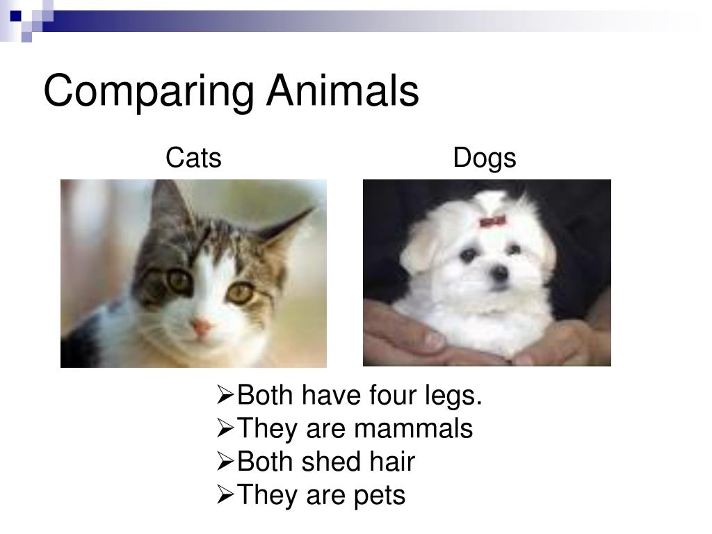 Comparing Animals