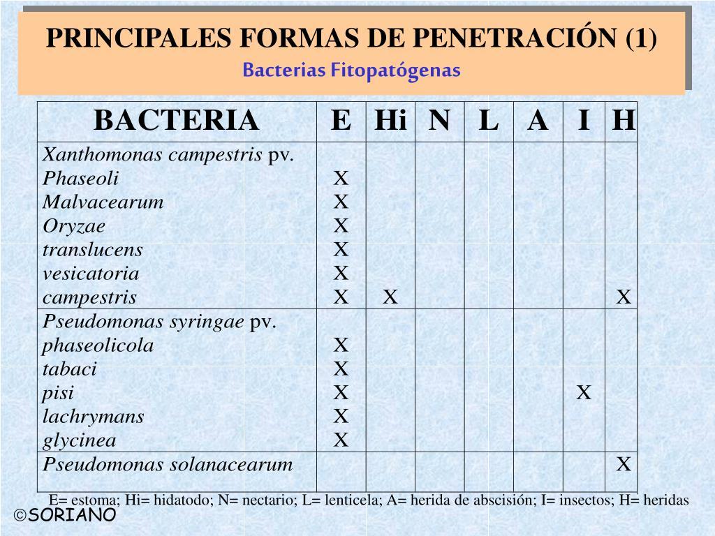 PRINCIPALES FORMAS DE PENETRACIÓN (1)