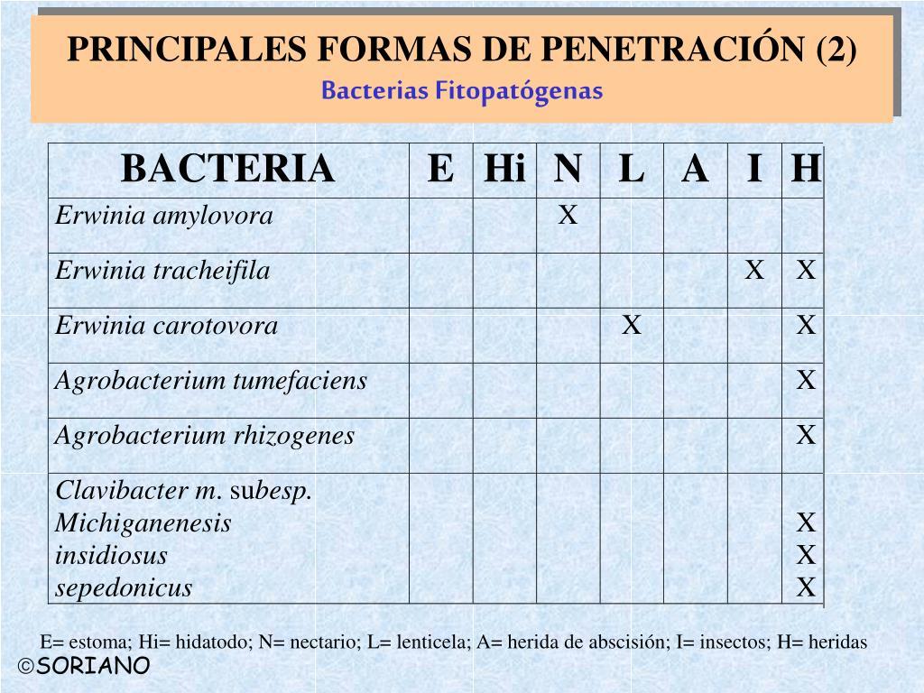 PRINCIPALES FORMAS DE PENETRACIÓN (2)