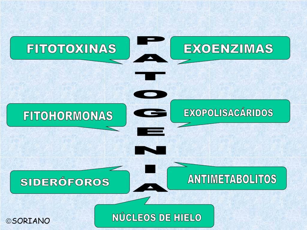 FITOTOXINAS
