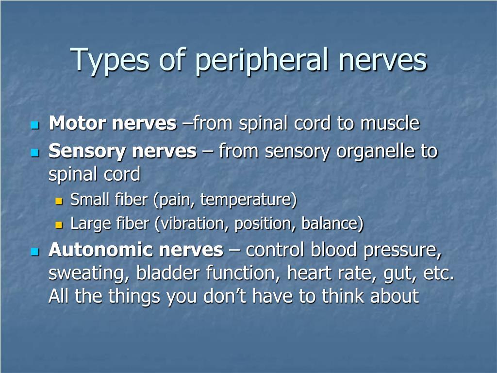 Types of peripheral nerves