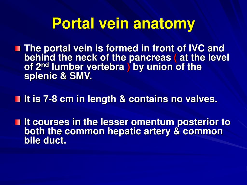 Portal vein anatomy