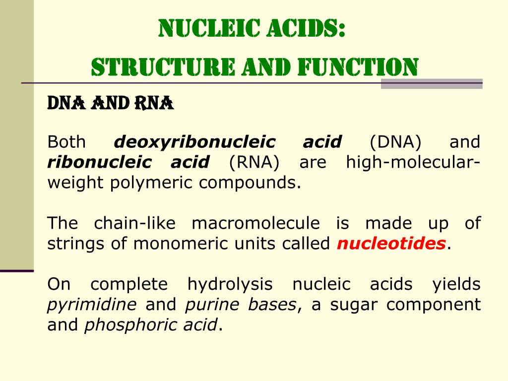 1 nucleic acid structure and function When one of these nucleic acid bases combines with a pentose sugar, a  nucleoside is formed  dna (deoxyribose nucleic acid): structure and  functions.