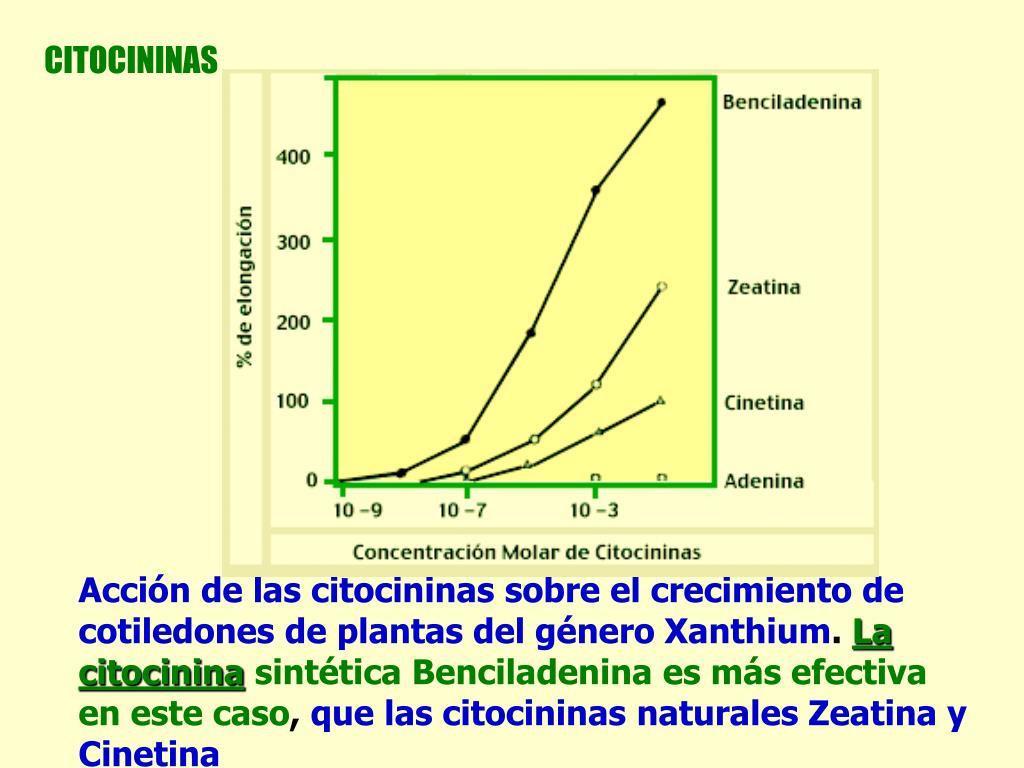 CITOCININAS