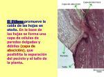 slide42