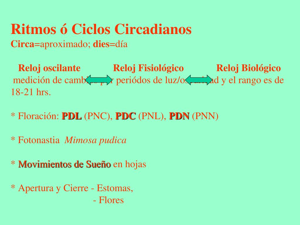 Ritmos ó Ciclos Circadianos