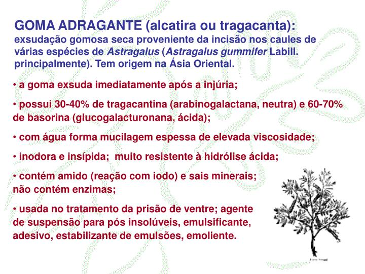GOMA ADRAGANTE (alcatira ou tragacanta):