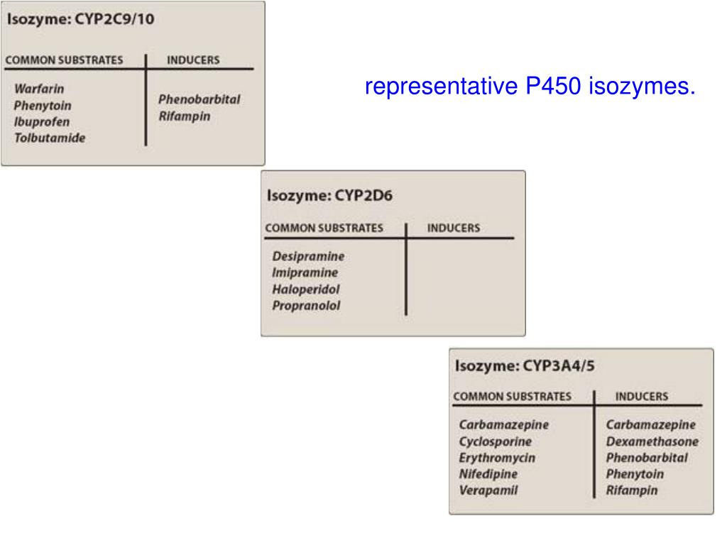 representative P450 isozymes.