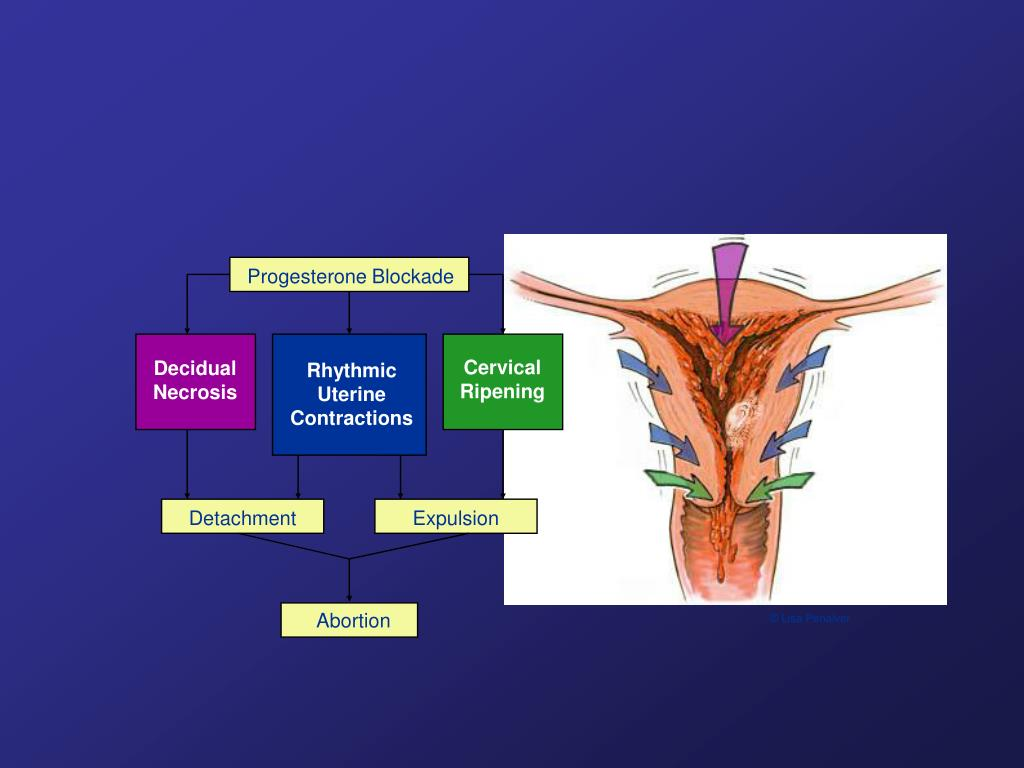 Progesterone Blockade