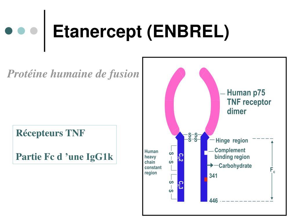 Human p75 TNF receptor
