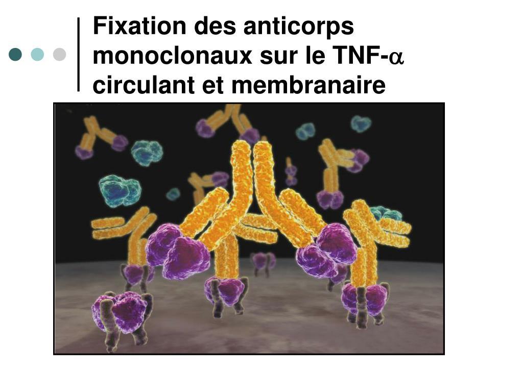 Fixation des anticorps monoclonaux sur le TNF-