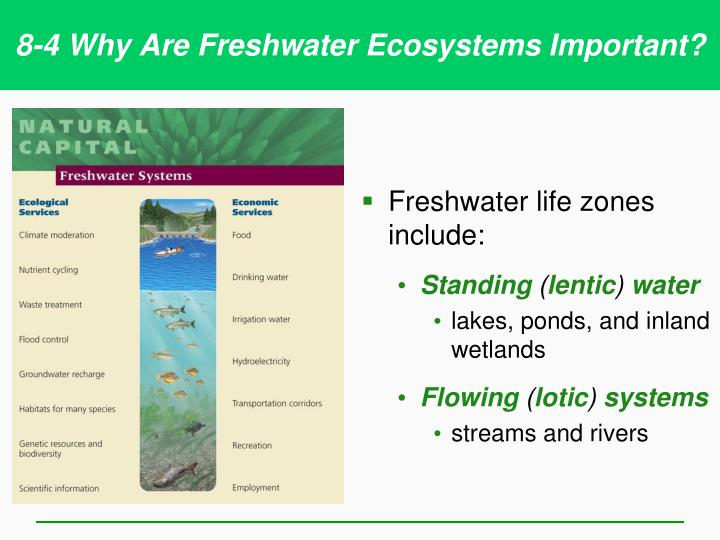 8-4 Why Are Freshwater Ecosystems Important?