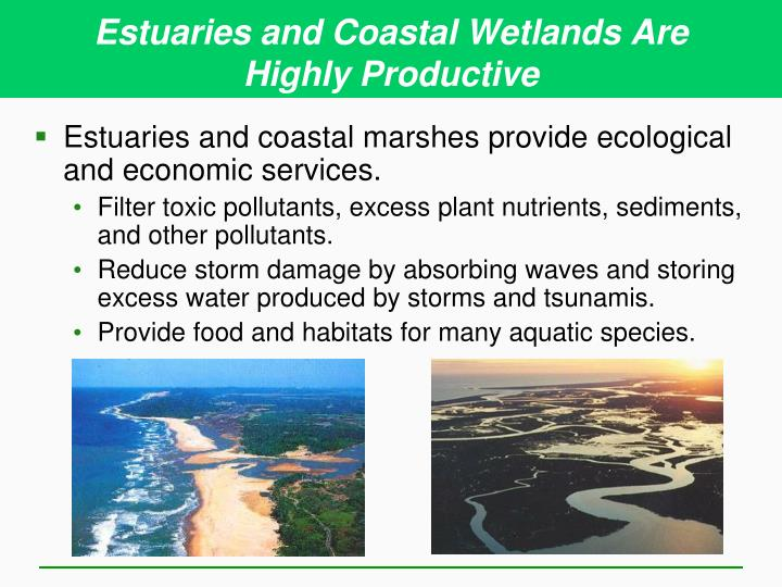 Estuaries and Coastal Wetlands Are