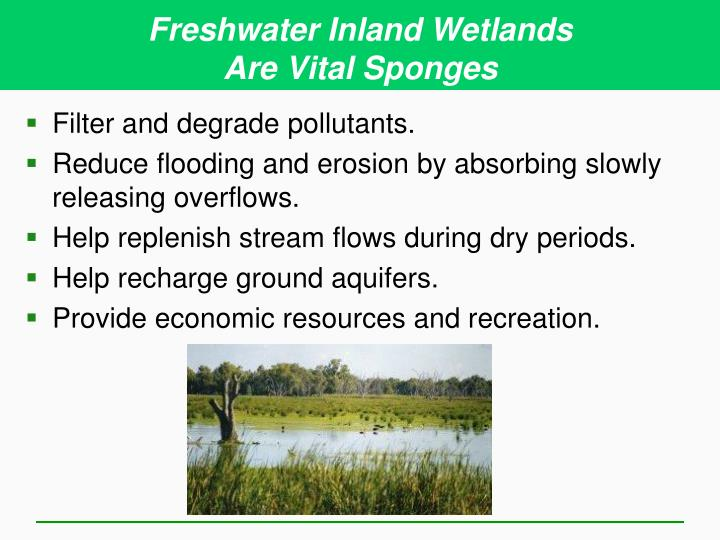 Freshwater Inland Wetlands