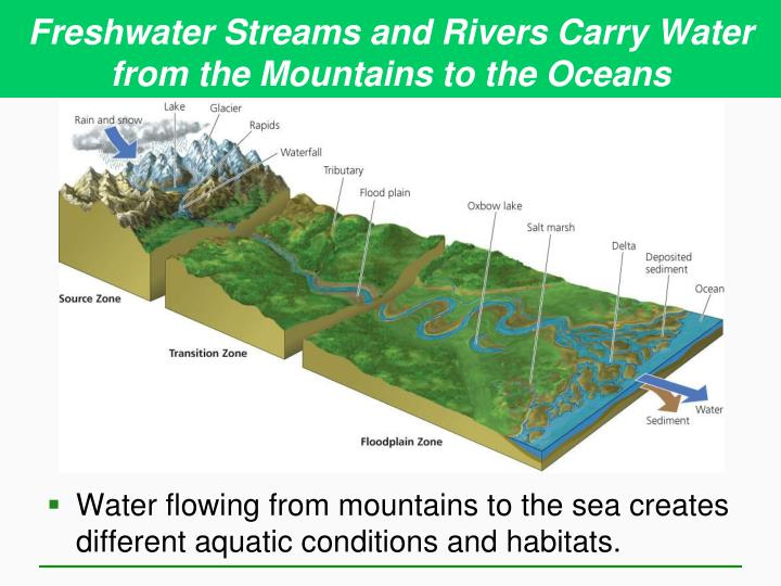 Freshwater Streams and Rivers Carry Water from the Mountains to the Oceans