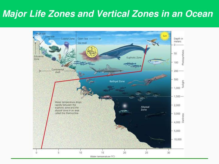 Major Life Zones and Vertical Zones in an Ocean