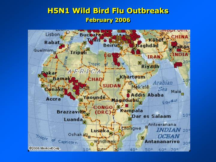 H5N1 Wild Bird Flu Outbreaks