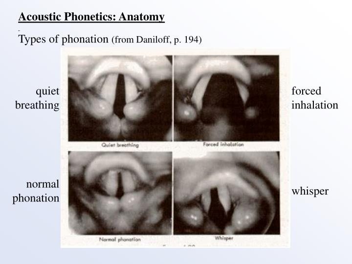 Acoustic Phonetics: Anatomy