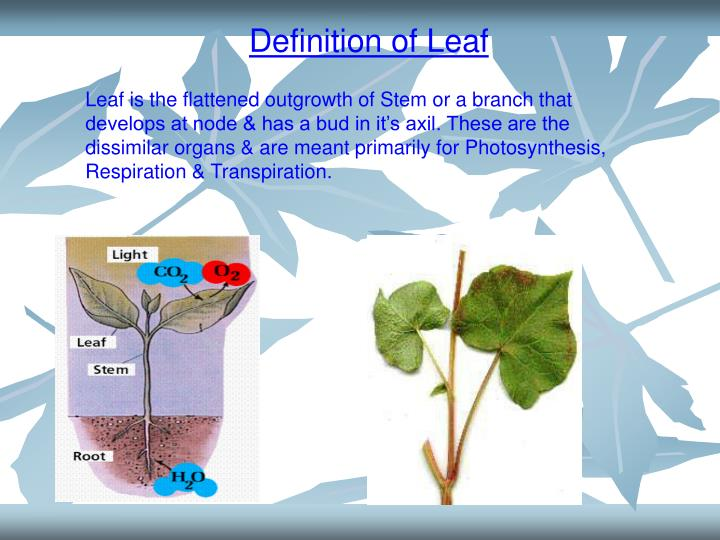 Definition of Leaf