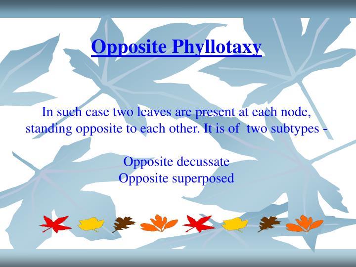 Opposite Phyllotaxy