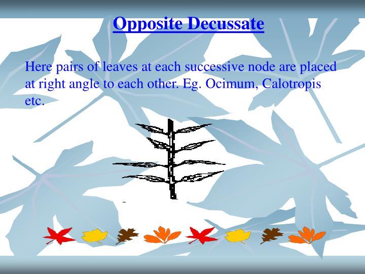 Opposite Decussate