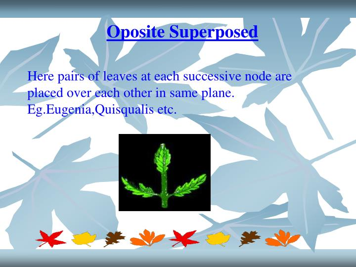 Oposite Superposed