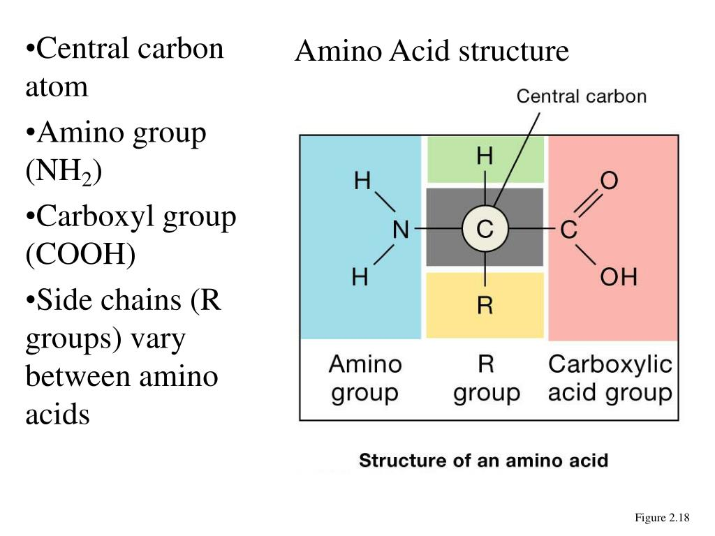 Ppt Types Of Organic Compounds Powerpoint Presentation
