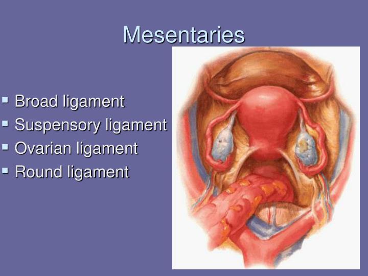 Mesentaries