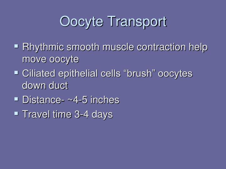Oocyte Transport